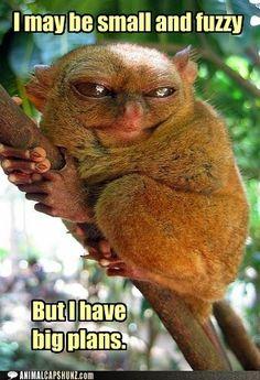 Funny Animal Captions - Ebil planz.