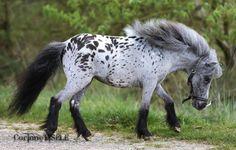 "scarlettjane22: ""facebook.com/corinne.eisele Heart of a Horse """