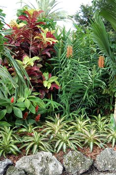 tropical garden Costus, Codiaeum Rheedii, Hedychium and Bromeliads in front (possibly Neoregelia) Tropical Garden Design, Tropical Backyard, Tropical Landscaping, Garden Landscape Design, Tropical Plants, Tropical Gardens, Florida Landscaping, Balinese Garden, Bali Garden