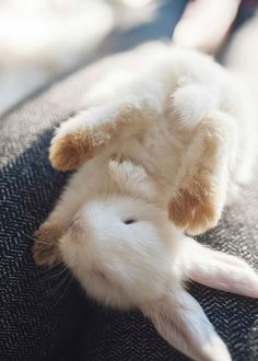 ☀️ un petit lapin So Cute Baby, Cute Babies, Baby Bunnies, Cute Bunny, Adorable Bunnies, White Bunnies, Hunny Bunny, White Rabbits, Baby Cats