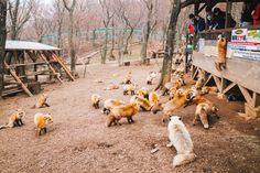 Shiroishi Zao Fox Village [1962x1309]