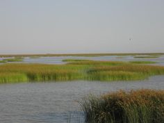 Doñana National Park- Hiking day trip?