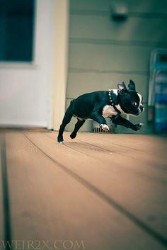Leapin' Puppies, Batman!