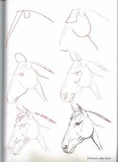 Wie Pferde Pferd Himmel gezeichnet 3599   32 zeichnen lernen