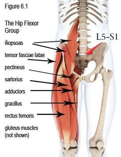 The Hip Flexor Group- wow, hamstrings, hip flexor and the psoas and how they effect the lower back