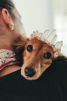 Cute baby animals - RUE rose quartz glamorous crystal wedding tiara for dogs small, medium or large Cute Funny Animals, Cute Baby Animals, Animals And Pets, Funny Dogs, Little Princess, Hot Dogs, Quartz Rose, Quartz Crystal, Crystal Wedding