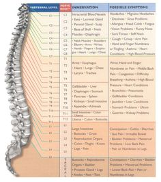 Another picture of each vertebrae and the parts of the body effected by the health of each http://infinityflexibility.com/wp/