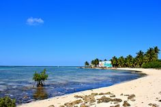 Gren Turtle Cay