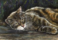 TABBY CAT JUST LAZING AROUND LIMITED EDITION PRINT OF PAINTING ANNE MARSH ART   eBay