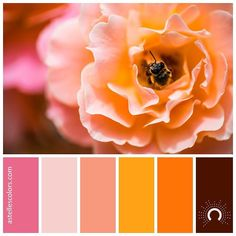 Color inspiration [ busy bee ] Diana Macesanu @diana_macesanu - thank you for sharing this beautiful picture! picture source @unsplash color palette no 213 color names: Light Crimson Champagne Pink Light Salmon Dark Tangerine Safety Orange French Puce name source @coolors_co Which color is your favorite in this palette? - Mine is Light Salmon for hex codes hop on over to my website astellescolors.com