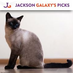 Provide Essential Flea and Tick Treatment for 40 Cats 80,000 daily clicks fund this project