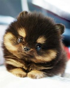 Someday, I will have a puppy like this!!