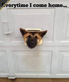 Everytime I Come Home ...,  Click the link to view today's funniest pictures!