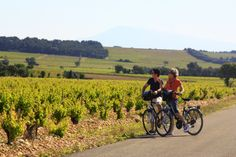 #Cycling in the #vineyards in #ChâteauneufduPape  ©Alain Hocquel-ADTVaucluse #Vaucluse #Provence #vélo