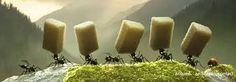 """Résultat de recherche d'images pour """"fourmi transporte poids"""""""