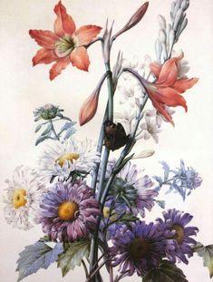 Пьер-Жозе́ф Редуте́ (фр. Pierre-Joseph Redouté, 10 июля 1759 года — 19 июня 1840 года) — французский художник и ботаник бельгийского происхождения, королевский живописец и литограф, мастер ботанической иллюстрации.