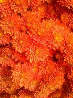 Vibrant tangerine blooms.