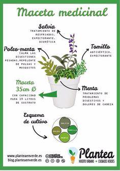 ¿Cómo combinar plantas curativas para hacer una maceta medicinal?