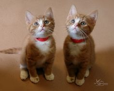 Twin - Kittens ♥♥♥♥  #cat #kitty #cute