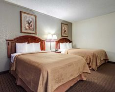 Quality Inn & Suites Hotel in El Paso TX featuring free wifi, Seasonal outdoor pool is right choice of El Paso hotels with airport shuttle nearby Fort Bliss Army base & well furnished room amenities Fort Bliss, Airport Shuttle, Hotel Amenities, Airport Hotel, Free Wifi, Outdoor Pool, Guest Room, Army Base, Bed