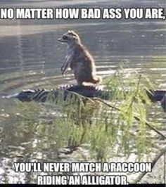 Ahh -> Cute Animals Memes!!