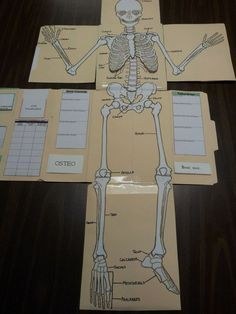We Have Just Finished Up The 2nd Part Of Our Lapbooks Lesson 2 Skeletal System For Apologias Exploring Creation With Human Anatomy And Physiology