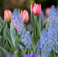 SPRING FLOWER SHOW