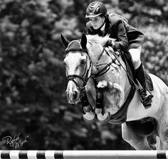 hunter jumperhorse equine photo image jump rider equestrian show competition dressage Horse Photos, Horse Pictures, Jumping Pictures, Zebras, Dressage, Horse Love, Grey Horses, Jolie Photo, Equine Photography