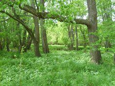 Fox Ridge State Park, an Illinois State Park located nearby Charleston, Mattoon