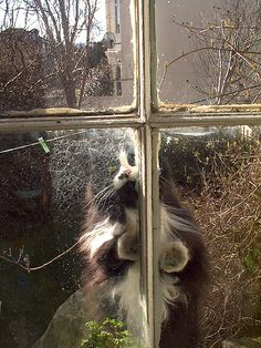 cat at the kitchen window