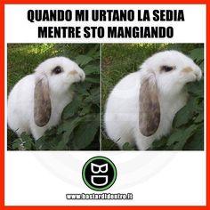 Ti è mai capitato? #coniglio #mangiare