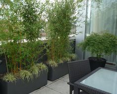 bamboo containers for a patio screen and under plantings.so doing this! Bamboo Screen Garden, Screen Plants, Garden Privacy, Outdoor Privacy, Balcony Plants, Privacy Hedge, Outdoor Balcony, Diy Pergola, Pergola Ideas