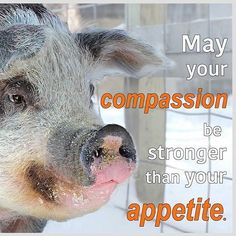 may your compassion be stronger than your appetite; compassion feels better than cruelty tastes. #vegan #vegetarian #crueltyfree