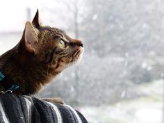 Kittie on www.yummypets.com