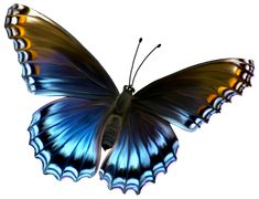 deviantART: More Like Beautiful Blue and Brown Butterfly PNG ...