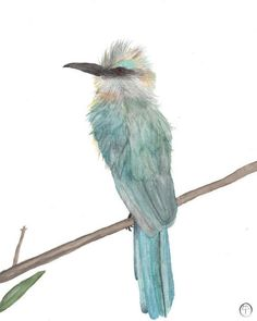 Your place to buy and sell all things handmade Watercolor Bird, Watercolor Paintings, Bee Eater, Pigment Ink, Aqua Blue, Fine Art Paper, Etsy Store, Eco Friendly, Printer