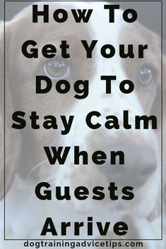 How to Get Your Dog to Stay Calm When Guests Arrive - Dog Training Advice Tips - Dog Obedience Training Tips - Hunde Positive Dog Training, Training Your Puppy, Dog Training Tips, Potty Training, Toilet Training, Brain Training, Pitbull Training, Puppy Training Schedule, Training Quotes