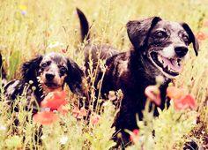 My dogs my Love ❤️ Josi Heinecke Photography