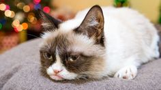 Grumpy Cat & Other Celebrity Cats Star in 'Hard to Be a Cat at Christmas' Music Video  (the cat food co. will donate a can of food to shelters and rescue organizations around the USA for each view the video receives. Please share!)