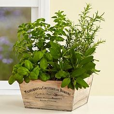 Gourmet Herb Garden and other flowers & plants at ProPlants.com