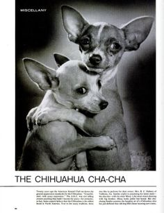 The Unbearable Cuteness of the 'Chihuahua Cha-Cha' | LIFE.com