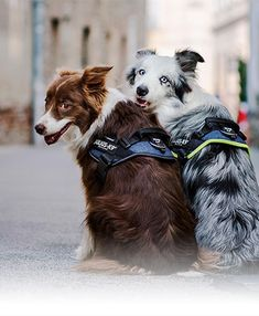 Femmes Filles Femmes Décontracté Shirt Beagle CHIENS DOGS animal domestique d/'élevage des chiots Rass