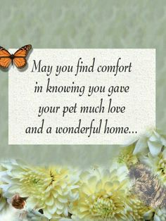 Pet Loss - ♥ May you find comfort in knowing you gave your pet much love and a wonderful home. Pet Loss Grief, Loss Of Dog, Pet Loss Quotes, Dog Quotes, Words Of Comfort, Lost, Sympathy Cards, Sympathy Quotes, Sympathy Gifts