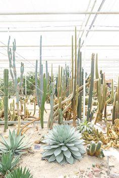 Cactus Oase in Ruurlo Holland