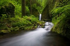 https://flic.kr/p/5cRQq3 | Eagle Creek Wilderness | This is an older image taken back in the spring. I have posted others from here, but this is from my second trip to the area. I always have a better idea of what I want to accomplish composition wise after reviewing images from the first trip. It's rather frustrating sometimes because often you don't get a second chance at a location...  I have been working on my post processing a bit lately and I plan on printing this one pretty large, so…