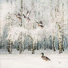 Flying Ducks - Bug Art greeting card