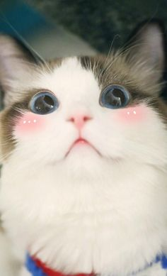 These pretty cats will brighten your day. Cats are fascinating creatures. Cute Cats And Kittens, I Love Cats, Crazy Cats, Kittens Cutest, Bad Cats, Cute Funny Animals, Cute Baby Animals, Funny Cats, Farm Animals