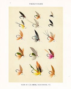 C. F. Orvis Fly Fishing print with flies for Trout anglers 1955 print from 1892 chromolithograph on Etsy, $27.50