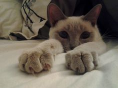 .this looks like my kitty that I had when I was little. C. ♥ .