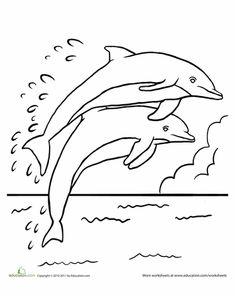 198 Best Dolfijnen Images On Pinterest In 2018